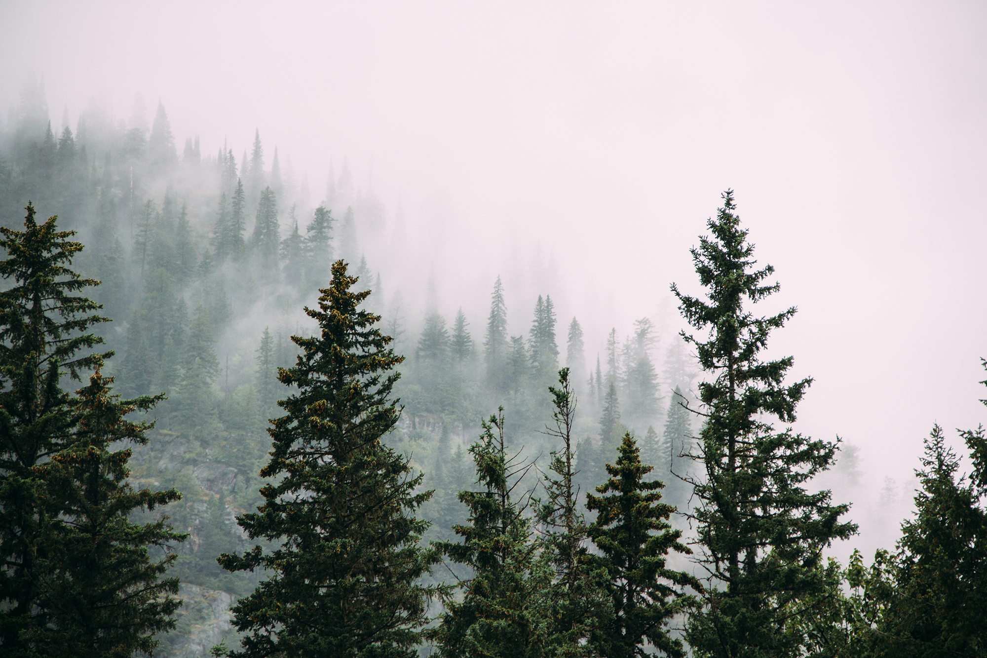 A forest shrouded in mist.