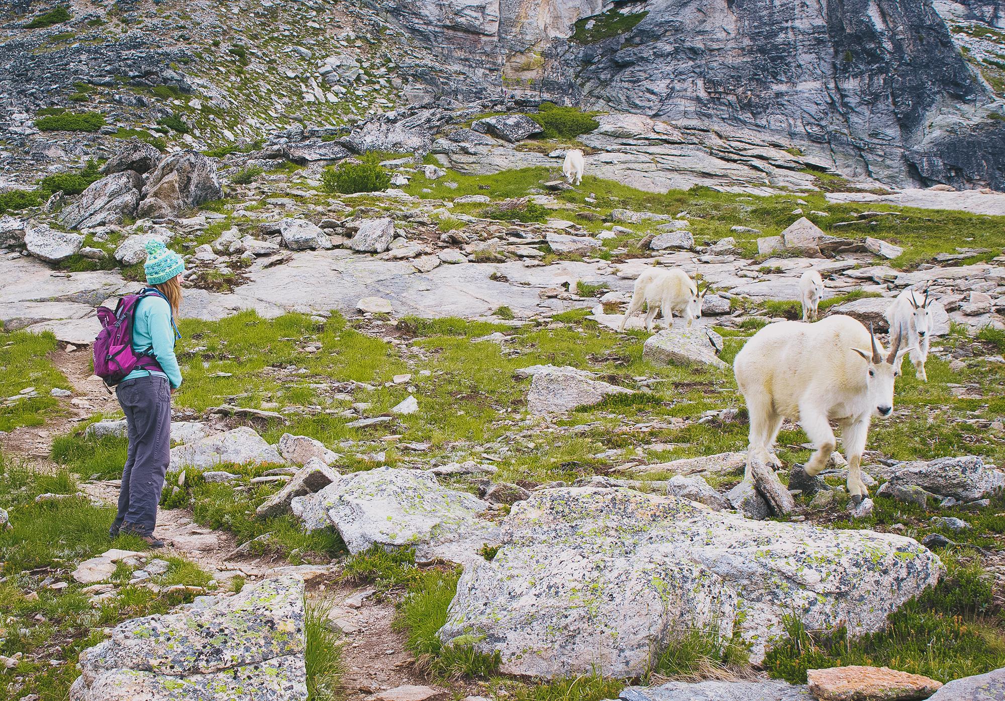Goats Gina www.boulderingnonline.pl Rock Climbing News